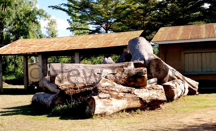 fzelia fricana logs impounded and offloaded at  offices in rua