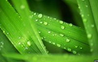Plants 'less thirsty' as climate warms