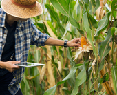 How big data and AI are helping Mexican farmers boost crop yield