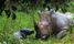 Newborn baby at Nakasongola Rhino Sanctuary