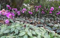 Xinlong tropical botanical garden: a creative blend of agriculture and tourism