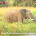 Did you know elephants can live up to 70 years?
