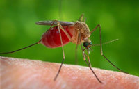 Vision Group joins malaria fight