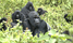 Gorillas are biggest tourism foreign exchange earner