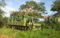 Giraffe translocation in Murchison