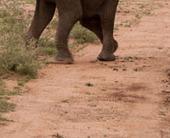 elephants-fighting-jagermo