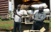 Tonnes of Congo-bound immature fish seized