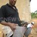 Guinea fowls more profitable than chicken, says fowl farmer