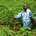 The love for cassava has enabled Ssenoga live his farming dream