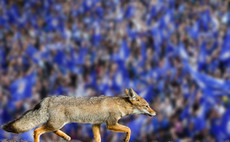'There will be no Leicester this season' sport bets fund manager says