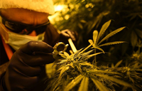Argentine Congress votes to legalize medical marijuana