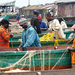 Lake Victoria fish stock dropping