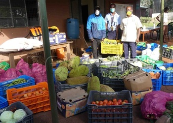 sigh-of-relief-as-ngamba-island-chimps-receive-food-aid