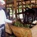 Kifuse: A teacher minting from farming