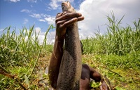 Two Owino market traders resort to fishing