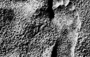 carbon-footprint-320x518