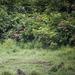Gabon bans tourists from seeing gorillas over coronavirus fears