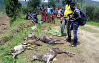 Heavy rains ravage Rukiga district, 2 dead in Kisoro