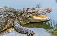 Woman killed by crocodile on Lake Albert shores