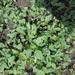 Pests, disease frustrate NARO's effort to enhancing vegetable seed