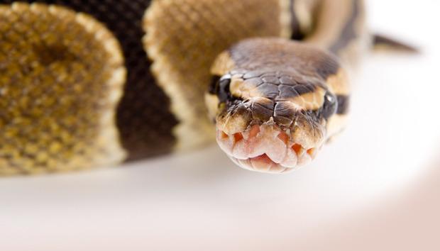 python100506953orig