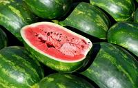 Melons: Sweet money maker