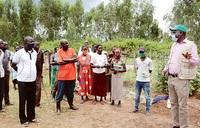 Vegetables improve incomes in Omugo