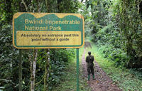 US tourist dies in Bwindi after wasp attack