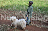 Three-year-old walks to clinic with pet dog