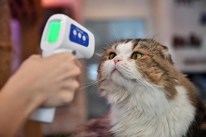 n employee takes the temperature of a cat at the reopened aturday at afe which had been temporarily shuttered due to concerns about the spread of the 19 novel coronavirus in angkok on ay 8 2020 hoto by illian