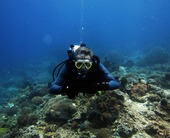 diver-diving-scuba-diving-2200820