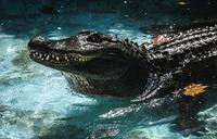 World's oldest captive alligator marks 83 years in Belgrade zoo
