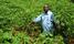 The love for cassava has enabled Ssenoga live his farming dream