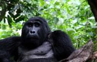 UNESCO sites: Bwindi's wonder world of gorillas