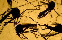 Sex and Zika: Risk of virus spread?