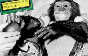january-ham-the-chimp