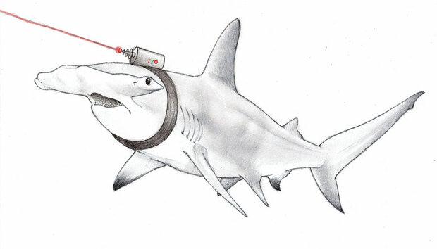sharks-with-friggin-lasers-by-robotninja-xxx