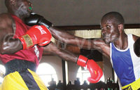 Veteran boxer Aliga returns to the ring