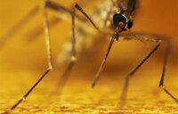 Malaria prevalence shoots to 60% average