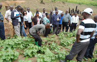 Kabarole farmers decry lack of better farming knowledge