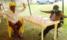 Uhuru Cautions Police Against Opposition Meetings