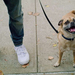 Overweight people more likely to have overweight dogs: study