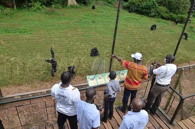 inister iwanda wearing a white cap in company of ukundo and usinguzi feeding the himpanzees at gamba sanctuary