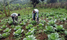 Government to use 4Ps approach to boost commercial agriculture