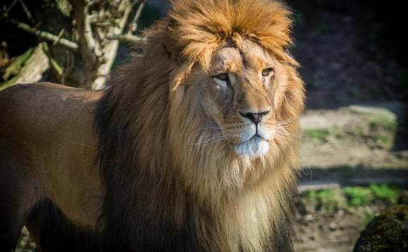 Why we see a future in the 'Lions of Africa': Carrick CEO