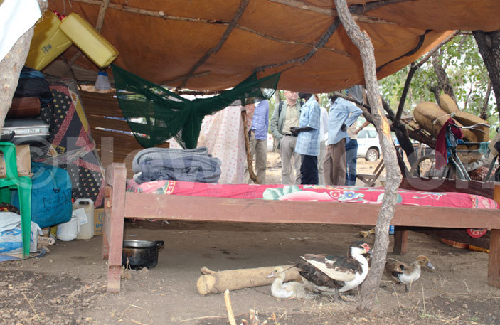 makeshift shelter for one of the refugees at idibidi settlement in umbe