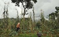 Bulambuli residents worry about food shortage