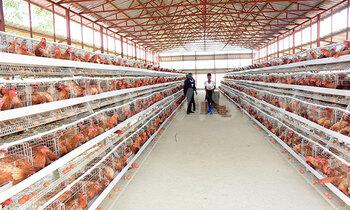 Farm1 350x210