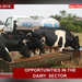 Ways you can benefit from the dairy farming