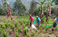 More than 400 face starvation after hailstorm in Kisoro